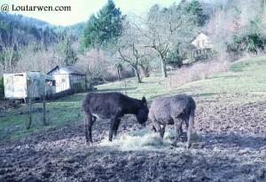 en promenade on rencontre des ânes...