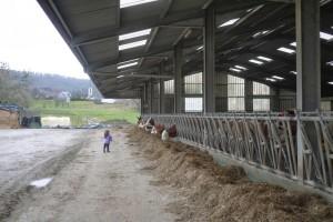 LMS observe les vaches